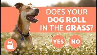 Why Do Dogs Roll in the Grass?