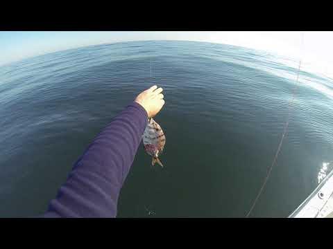 Bottom Fishing Morehead City NC -  Atlas Tanker