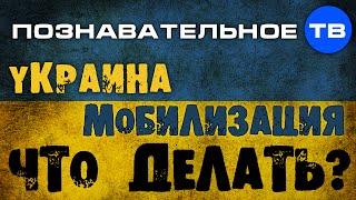 Украина. Мобилизация. Что делать? (Познавательное ТВ, Николай Стариков)