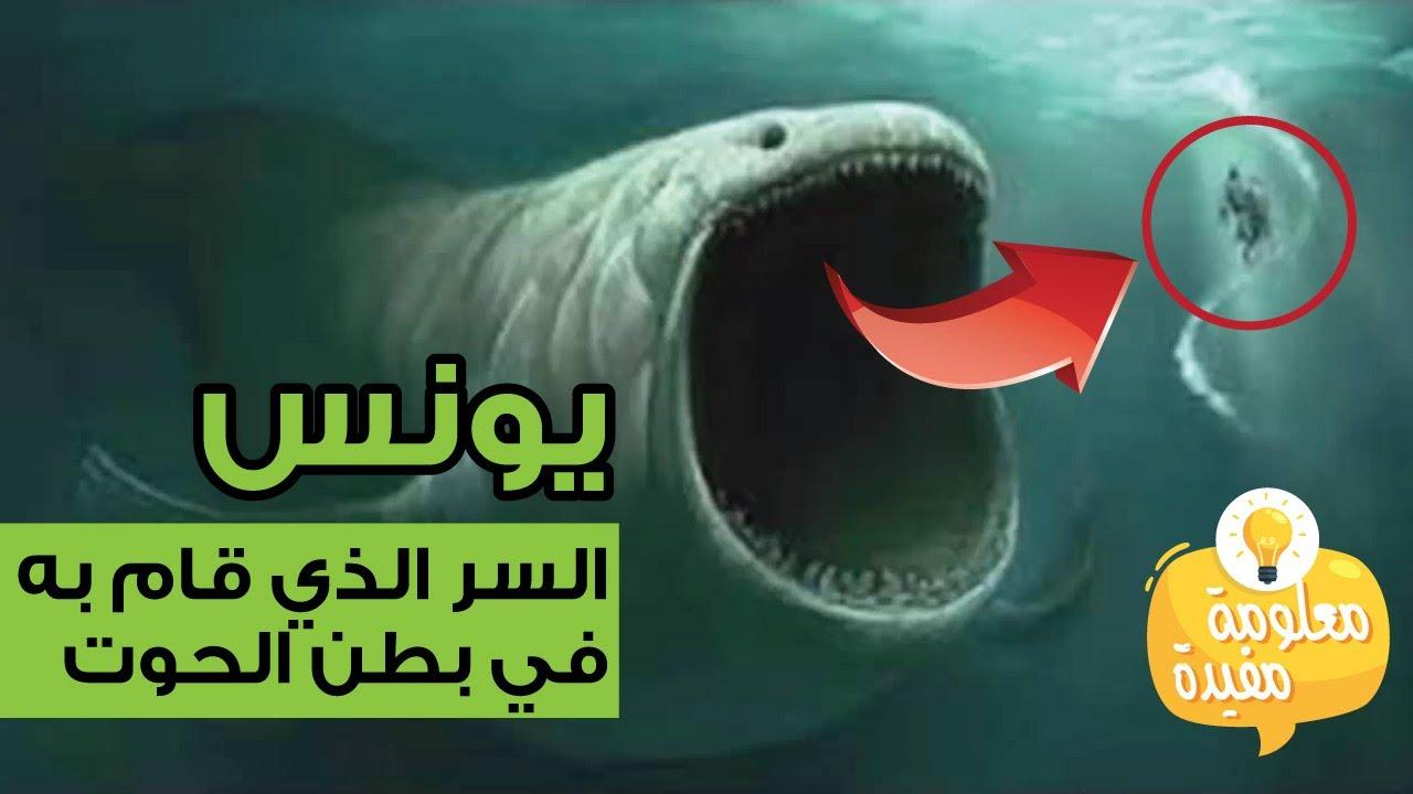 تعرف على السر الذي قام به يونس في بطن الحوت غير الدعاء