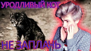 Уродливый кот | TRY NOT TO CRY CHALLENGE...