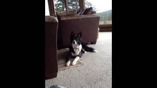 funny-dog-whistle Videos - View and free download with Any