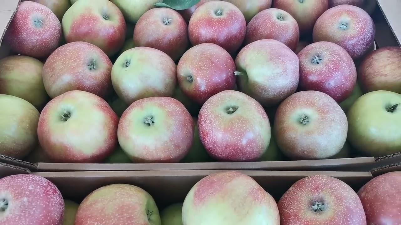 Яблоки оптом. Джонаголд 70+ (1 сорт). РостАгроЭкспорт