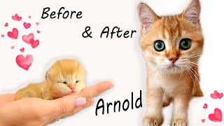 How did kitten Arnold growing up? Watch this collection of cute moments! Compilation