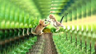 Породы кошек картинки🐱