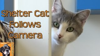 Shelter Cat Follows the Camera but Will She Go Through the Cat Tunnel?