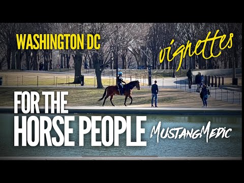 Sunday Washington DC by the Lincoln Memorial this one's for the horse lovers #Shorts