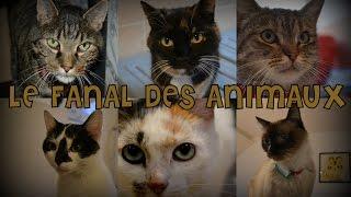 ♡ Le fanal des animaux lRefuge pour chats à Bxl ♡