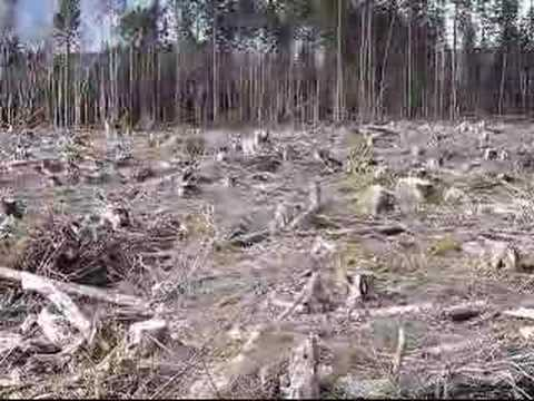 an essay on clear cutting of forests Clear-cutting enables forest operators to get the most out of a forest for an earthroots report on illegal clearcutting clearing the forest, cutting the.