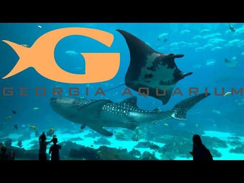 Georgia Aquarium Tour & Review with The Legend