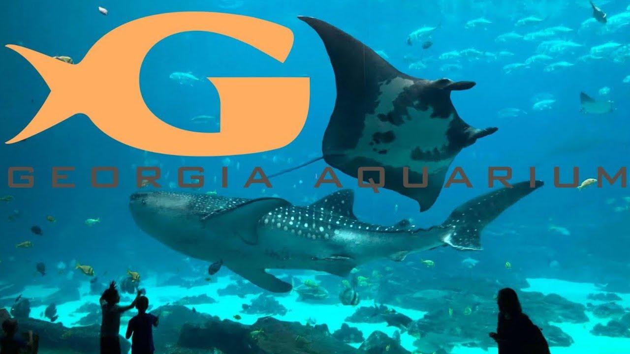 Georgia Aquarium Tour Review With The
