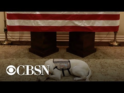 President Bushs service dog Sully guards his casket