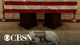 President Bush's service dog Sully guards his casket