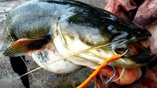 ОТКРЫТИЕ СЕЗОНА ЛОВЛЯ СОМА НА КВОК 2020 Рыбалка на сома Квочение сома Catfish Сом
