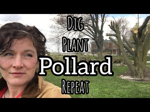 Dig, Plant, POLLARD, Repeat & the Analogy of Life | Front Porch Catholic