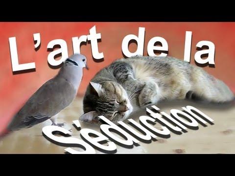 L'ART DE LA SÉDUCTION - PAROLE DE CHAT