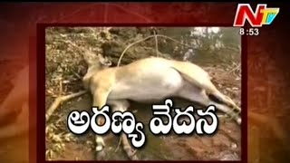 Animals Hunting in Adilabad Forest - Be Alert