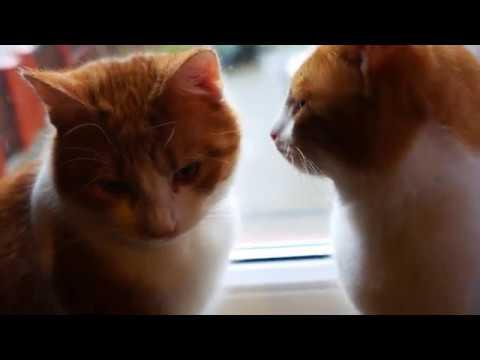 Cats on a scratcher 4k UHD 🐈 🐱