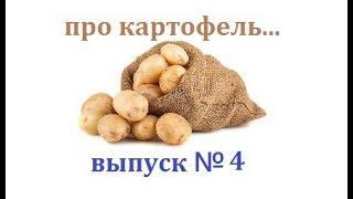 Про картофель, про наш второй хлеб...