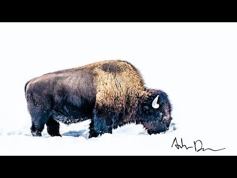 FREE winter trip into YELLOWSTONE NATIONAL PARK