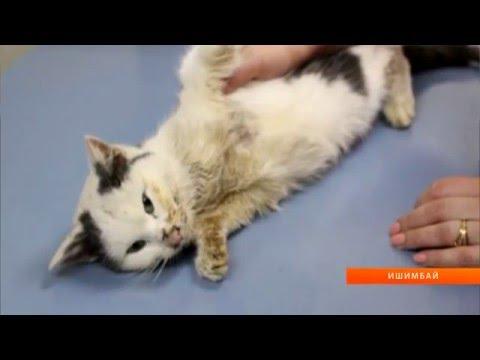 U News. В Ишимбае спасают жизнь кошке, оставшейся без лапы.