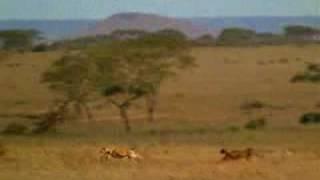 搞笑影片 非洲獅子