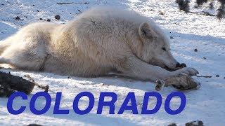 WYŁAM z WILKAMI w COLORADO - Kasiolog #9