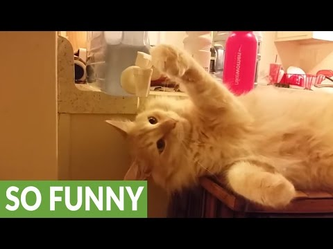 Clever kitty knows how to use water cooler