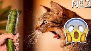 СМЕШНОЕ ВИДЕО ПРО КОШЕК 2017 ЧАСТЬ 2 FUNNY VIDEOS ABOUT CATS 2017 PART 2