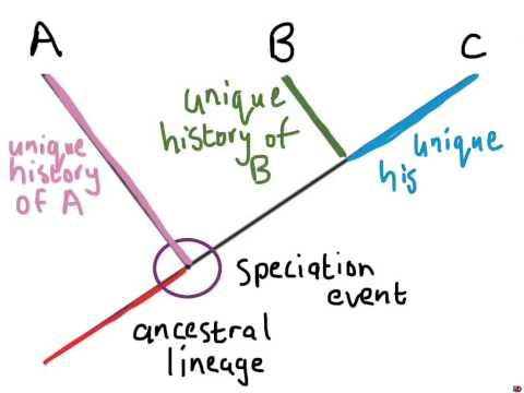 Understanding Phylogenetic Trees (1)