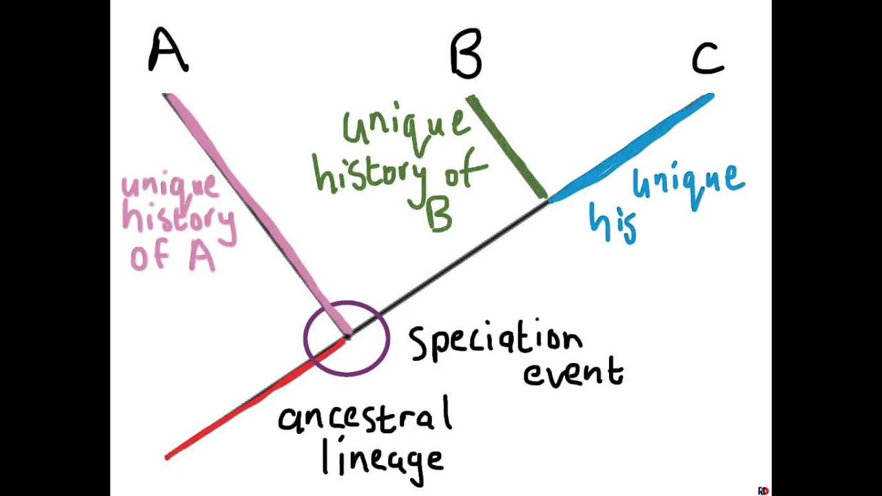 Understanding Phylogenetic Trees 1