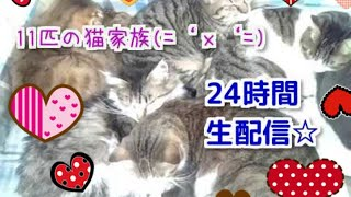 【2018年9月18日】 猫部屋24時間Live配信①(='x'=)