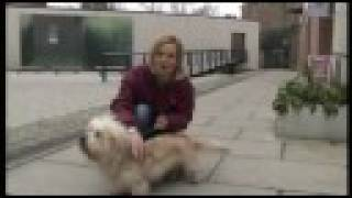 Dandie Dinmont Terrier - Can You Name That Cute Breed Of Dog Bbc