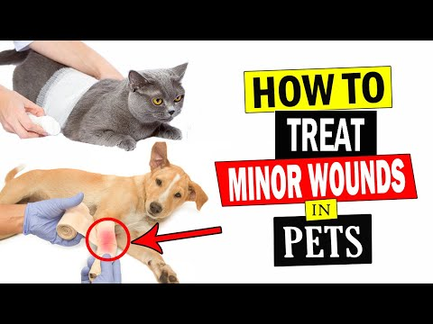 how-to-treat-minor-wounds-in-pets-||-treat-pets-wounds