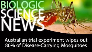 Science News - Australian trial experiment wipes out 80% of Disease-Carrying Mosquitoes