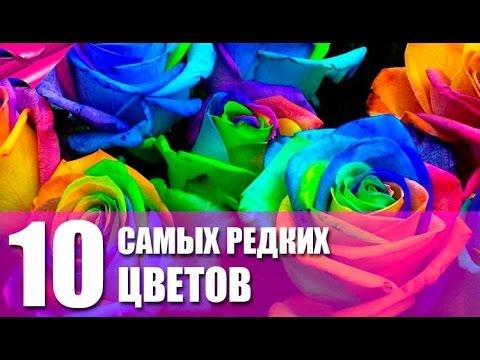 ТОП 10: Самые дорогие и редкие цветы мира