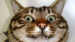 Смешные кошки 2 ● Приколы с животными лето 2014 ● Funny cats vine compilation ● Part 2