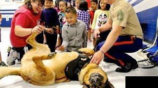 戦地で兵士の命を守った犬 残りの人生はたっぷり甘やかされる! アメリ...