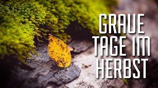 Herbstfotos - Fotgrafieren auch an grauen Herbsttagen & Nebel || KNIPSBUDE IN ACTION