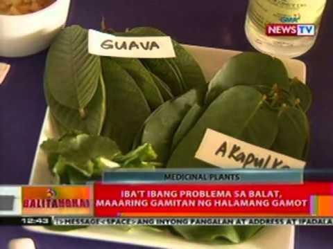 BT: Mahigit 1,500 halaman sa Pilipinas, maaaring gamitin sa paggamot