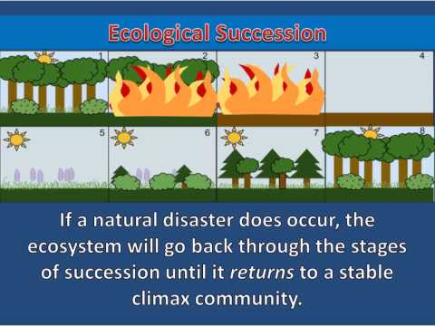 what caused succession Ecological disturbances or new areas are the causes of ecological succession the ecological disturbances such as glaciers, forest fire etc, are the causes for the.