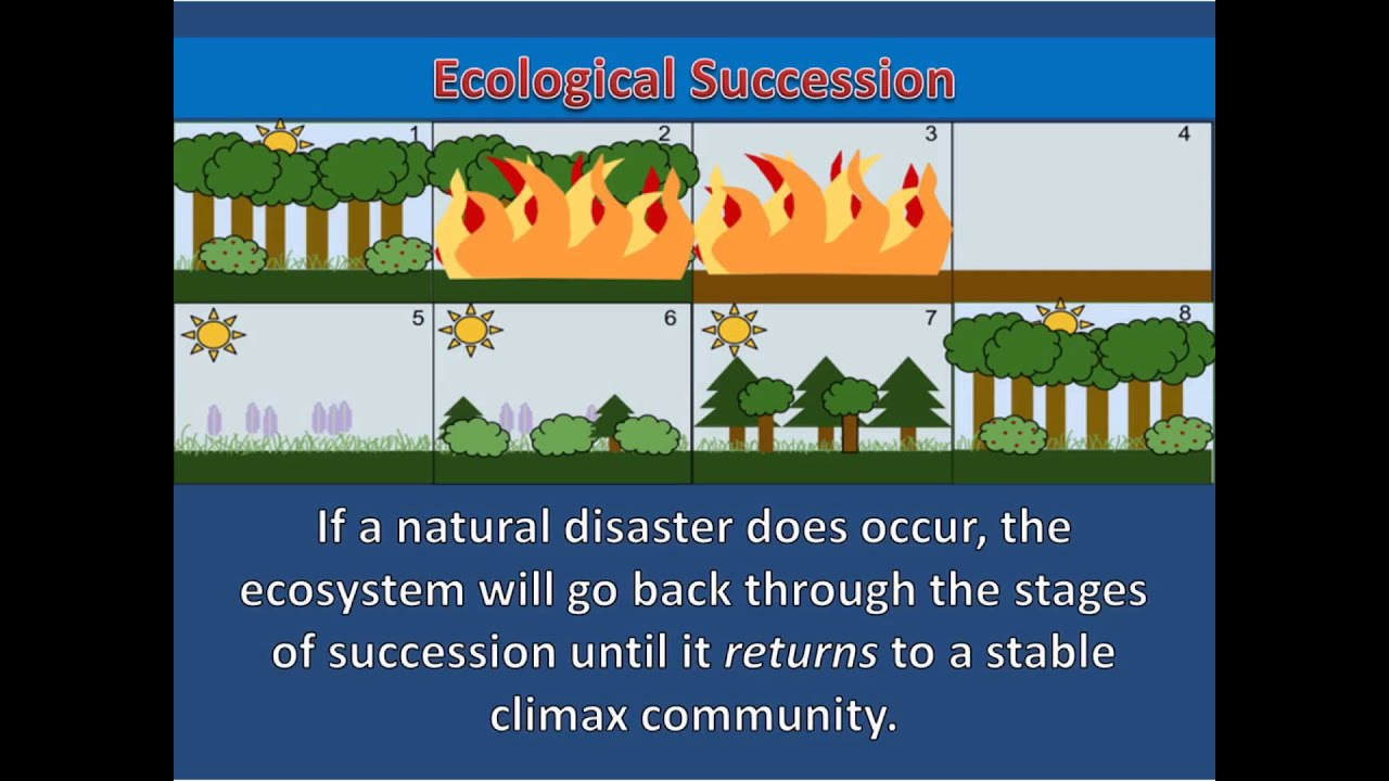 Ecological Succession Secondary Succession Youtube