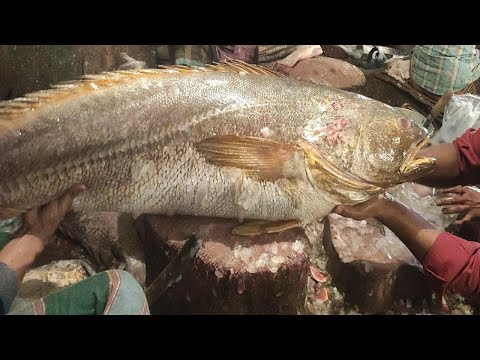 Amazing Red Fishing Cut Into Pieces In Fish Market 2020