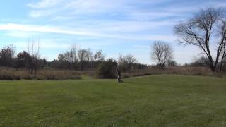 German Shepherd Off Leash Chicago Dog Training (suburban K9)