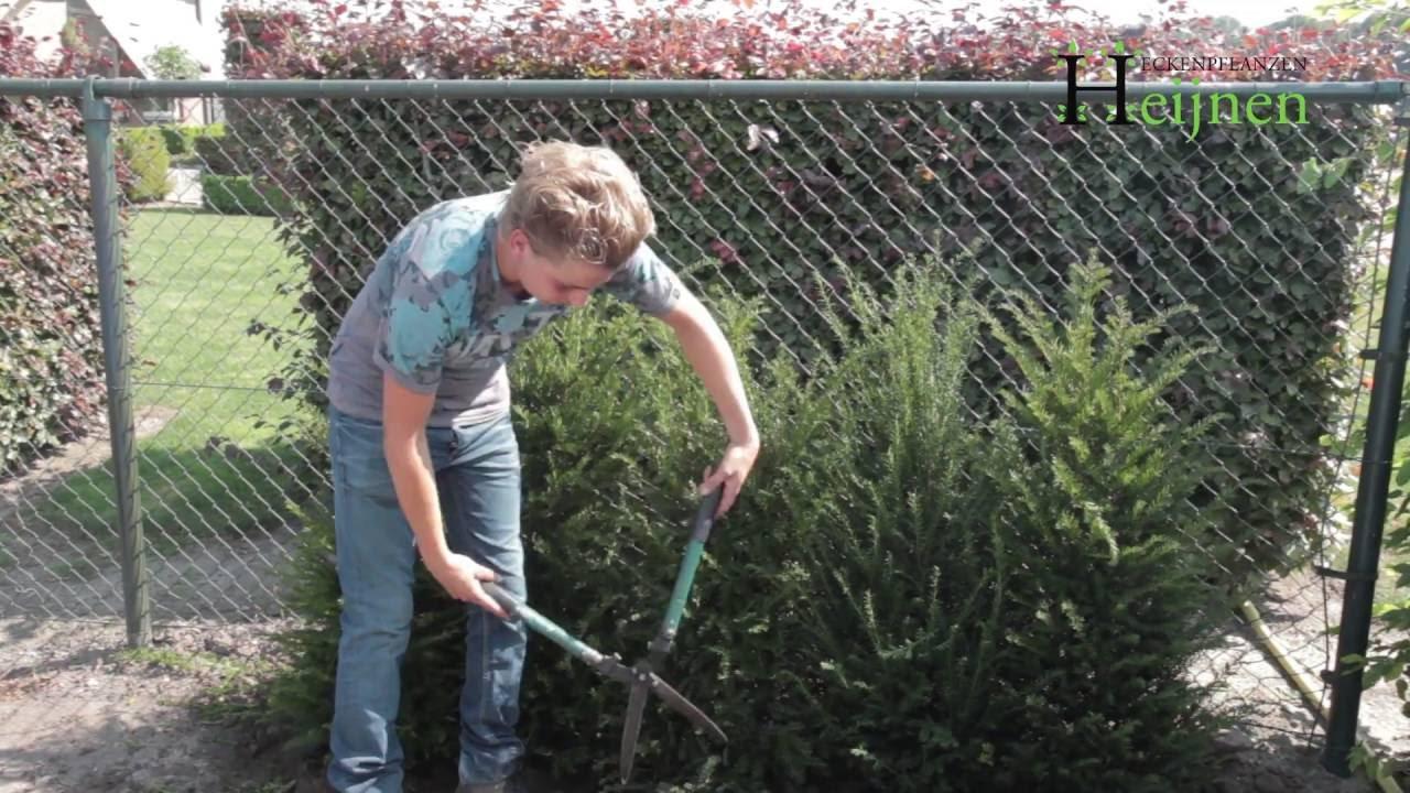Hecken Pflanzen Tipps & tricks