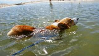 (hd) Shirahama Beach 2 / 白浜海岸 2 20100804 Goro@welsh Corgi