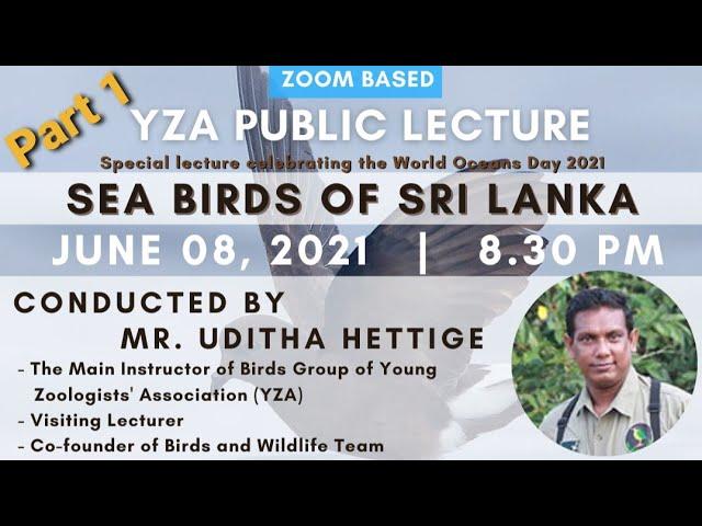 Sea Birds of Sri Lanka