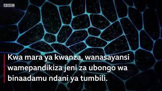 Chembe za ubongo wa binadamu za pandikizwa ndani ya Tumbili