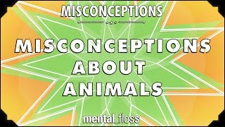 Misconceptions about Animals - mental_floss on YouTube (Ep. 55)