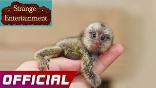 Social Animal | The 20 Smallest Animals in the World Recent Updates
